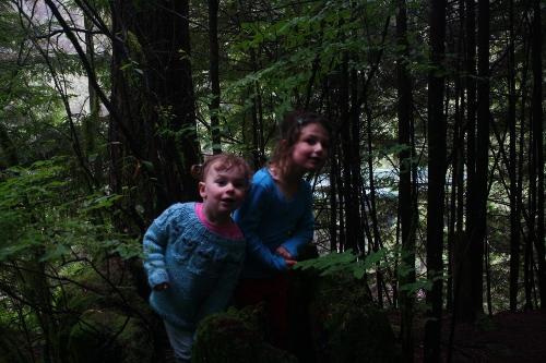 forest antics