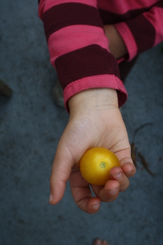 claire holding a tomato