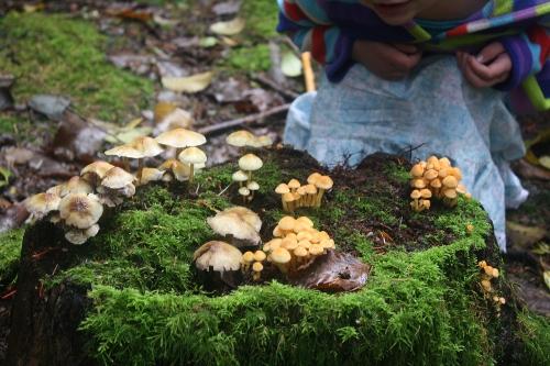 toddler wondering about mushrooms