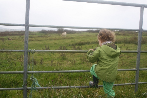 toddler climbing on a farm gate