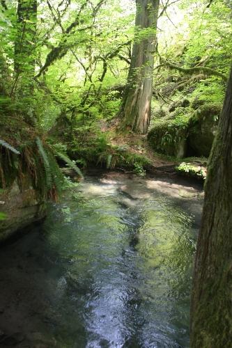 tenderfoot creek