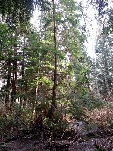 walking beside a forest stream