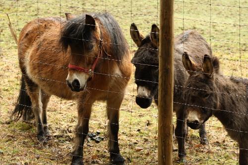 donkeys_and_pony_farm_walk