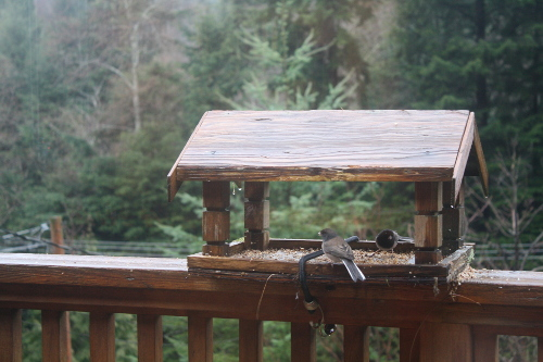 birds at a bird feeder