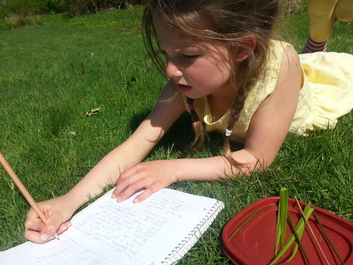 studying meadow grass