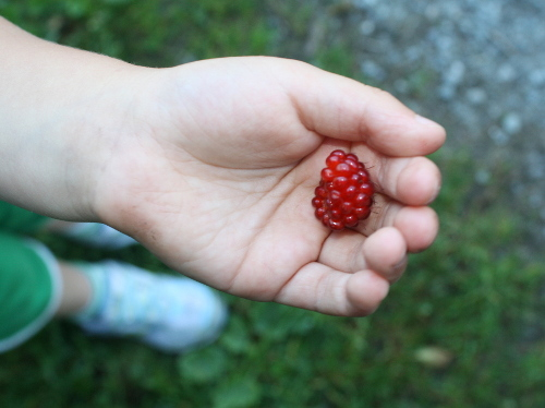 little girl holding a berry