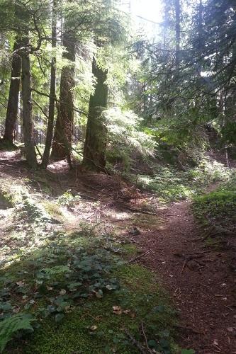 Mount Gardner trail