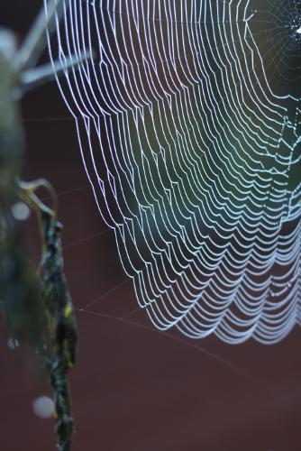 dewy_spiderweb
